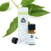 Ravintsara etherische olie, biologisch
