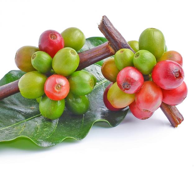 Koffie CO2 extract, biologisch