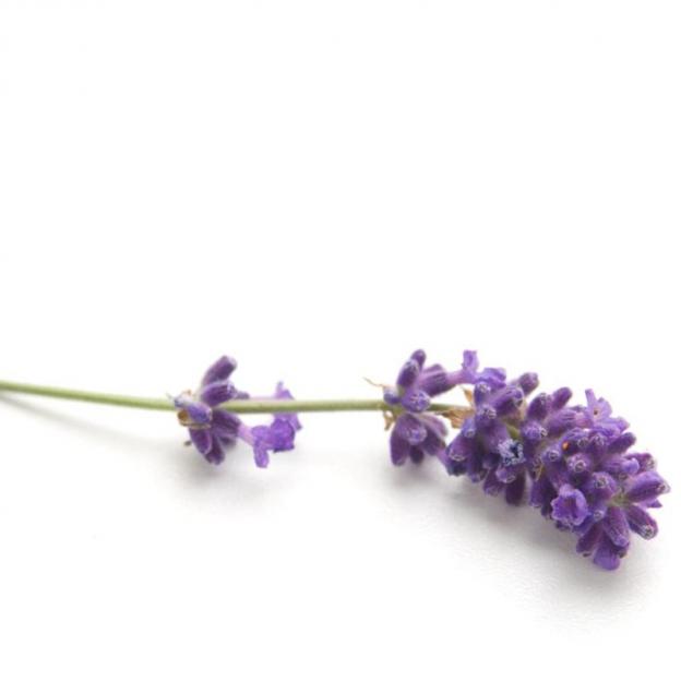 Lavendelolie, Frankrijk, cultivar