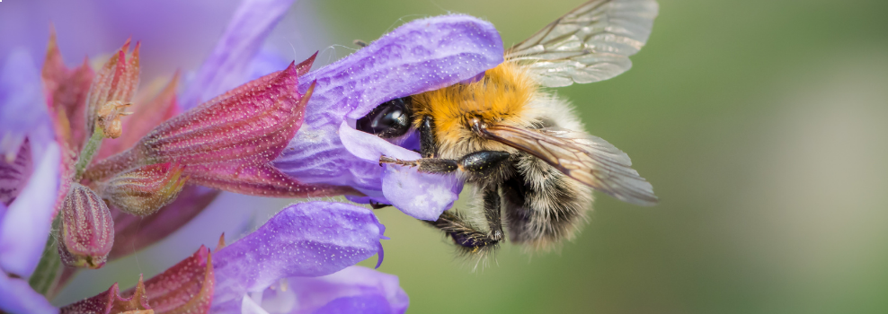 Bee good for nature!