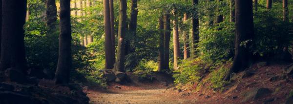 Baden in het bos = Forest Bathing