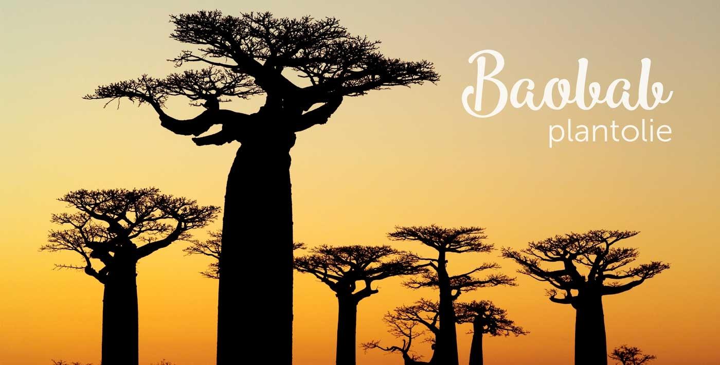 Baobab plantolie